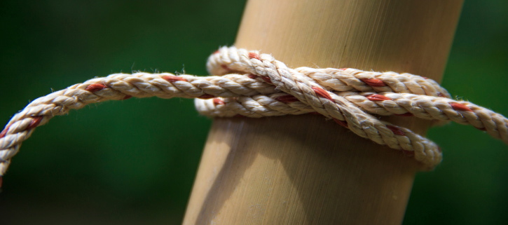 What Are Today's Most Effective Managers Doing? Feedback Loops