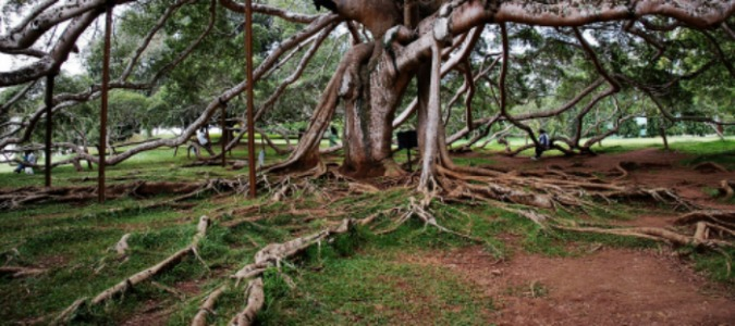 Stop Attacking The Symptoms of Disengagement: Go To The Root Cause